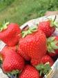 觀光果園採摘生果