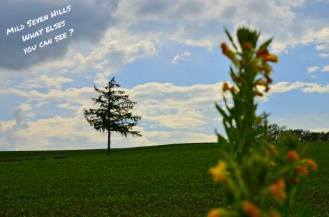 Mild Seven Hills 4
