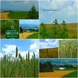 和田草原和橡果之鄉